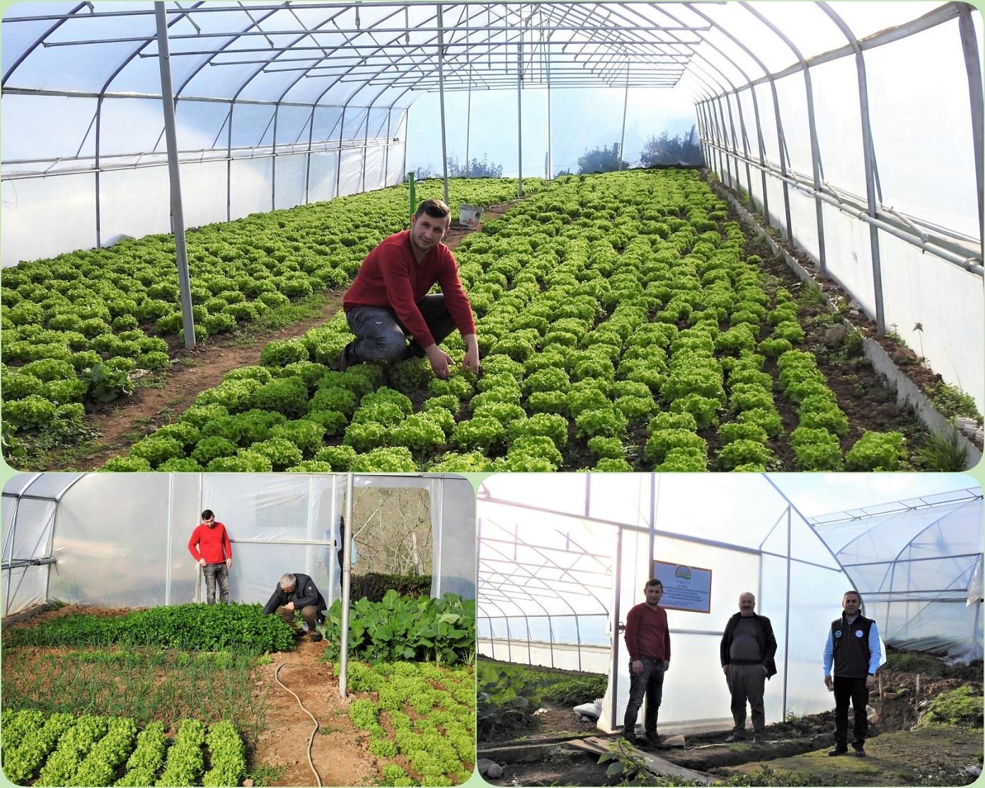 Genç Çiftçi Serasında İlk Hasadını Yapmanın Sevincini Yaşadı