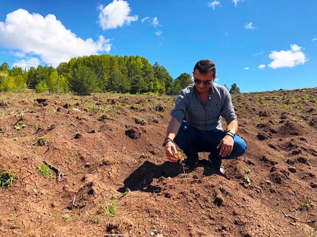 Alucra'da Kara Elmas Yetişiyor