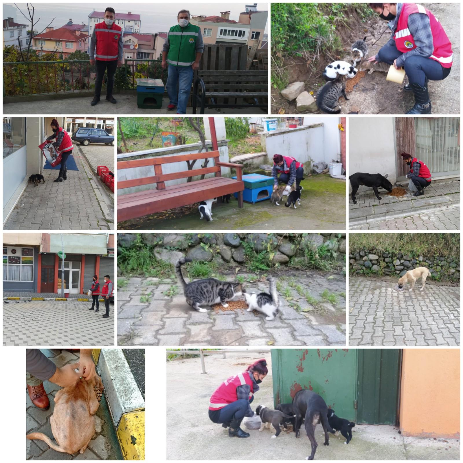 Keşapta Sokak Hayvanları Yasaklarda
