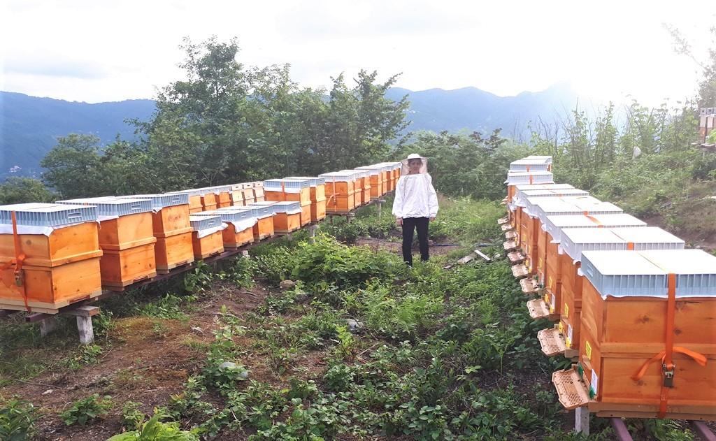 Arıcılık Yatırımlarına %50 Hibe Desteği
