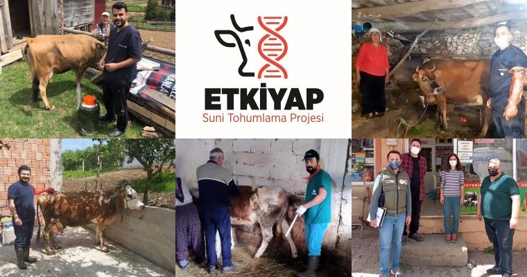"""Giresun'da Suni Tohumlama Projesi """"ETKİYAP"""""""