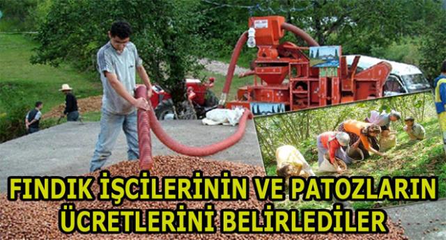 Patoz Ve Fındık İşçilerine Ödenecek Ücretler