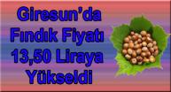 Giresun'da Fındık Fiyatı 13,50 Liraya