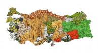 Tarım Havzalarının Ürün Listesi