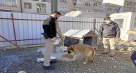 Giresun Polisinden Sokak Hayvanlarına Yem Ve Mama